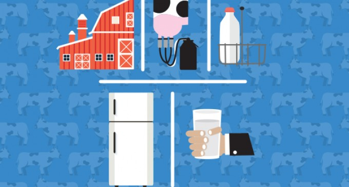 The Dairy Supply Chain: From Farm to Fridge
