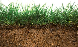 Supply Chain Sustainability Takes Root